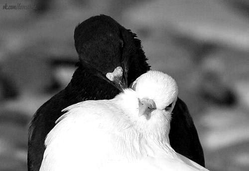 Секрет счастья — это внимание друг к другу. Счастье жизни составляется из отдельных минут, из маленьких, быстро забывающихся удовольствий от поцелуя, улыбки, доброго взгляда, сердечного комплимента и бесчисленных маленьких, но добрых мыслей и искренних чувств. Любви тоже нужен её ежедневный хлеб.